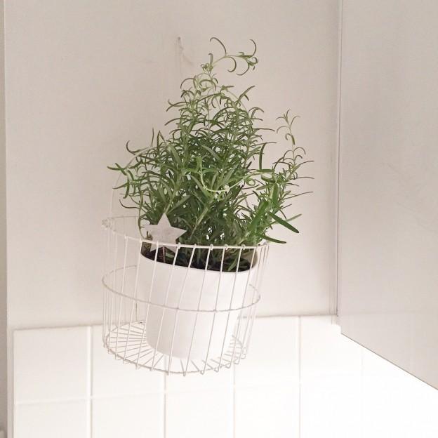 Urban Jungle Bloggers Hang Planters sophiagaleria