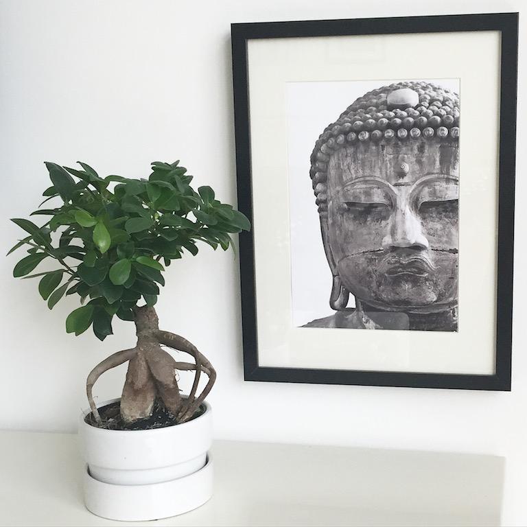 Plants and Art Urban Jungle Bloggers sophiagaleria
