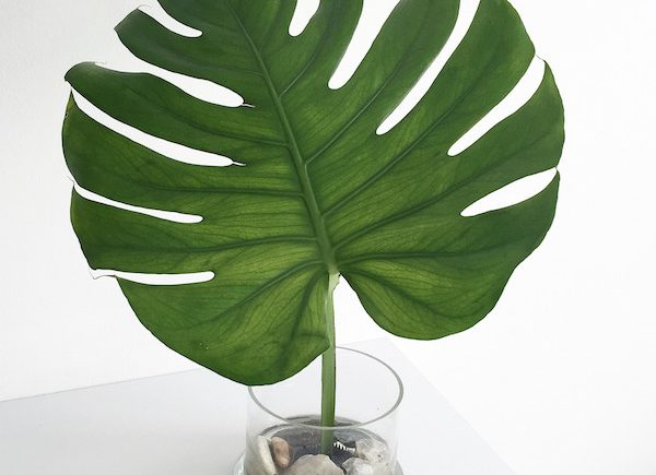 Freestyle Ikebana Monstera Flower Power sophiagaleria