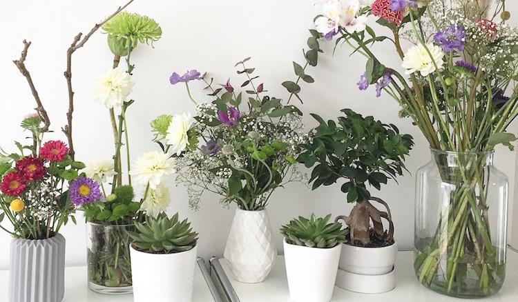 Plants and Flowers UJB sophiagaleria