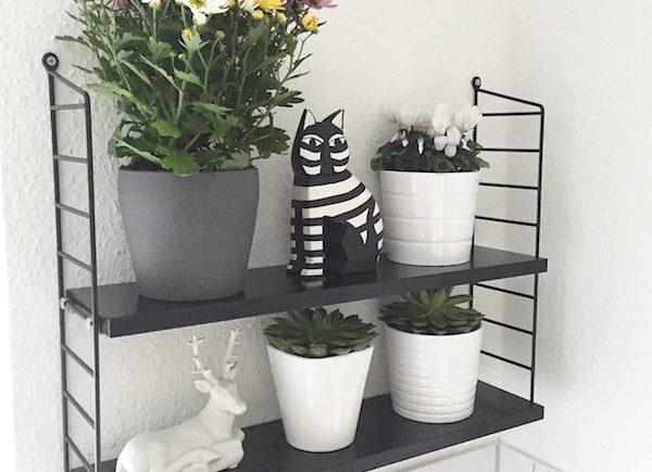 plantshelfie sophiagaleria
