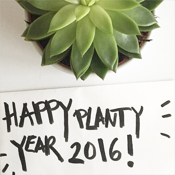 planty wishes urban jungle bloggers sophiagaleria