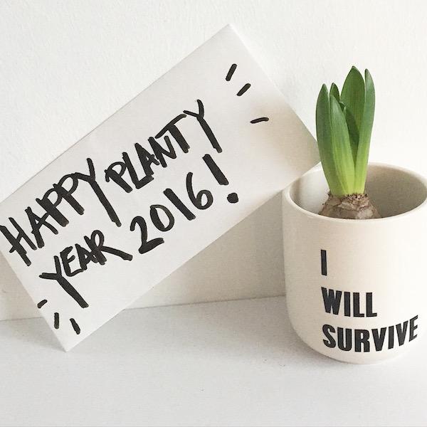 planty wishes urban jungle bloggers sophiagaleria