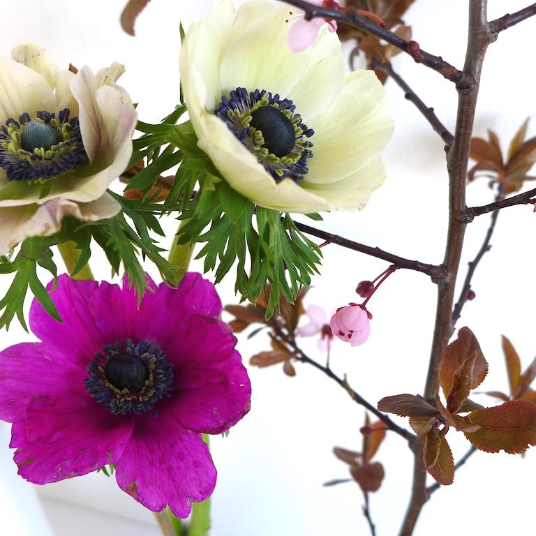 Anemonen und Kirschblueten sophiagaleria flower friday
