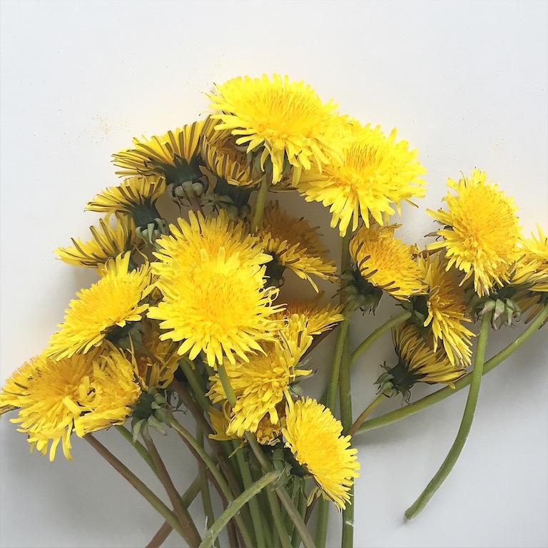 Löwenzahn Blumen am Wegesrand sophiagaleria