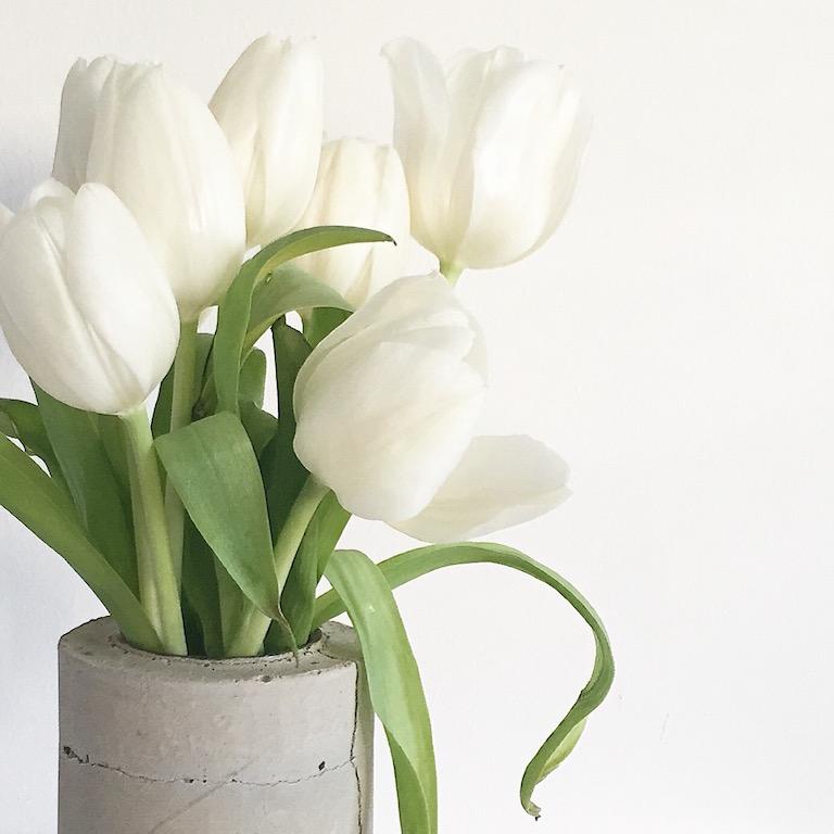 weisse tulpen sophiagaleria