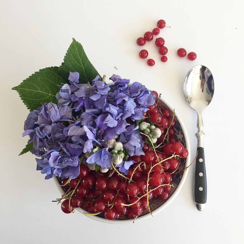 Hortensien on my plate sophiagaleria