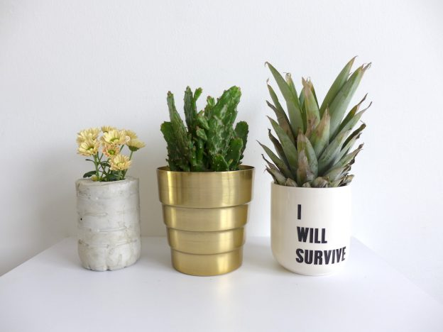 three plants urban jungle bloggers sophiagaleria