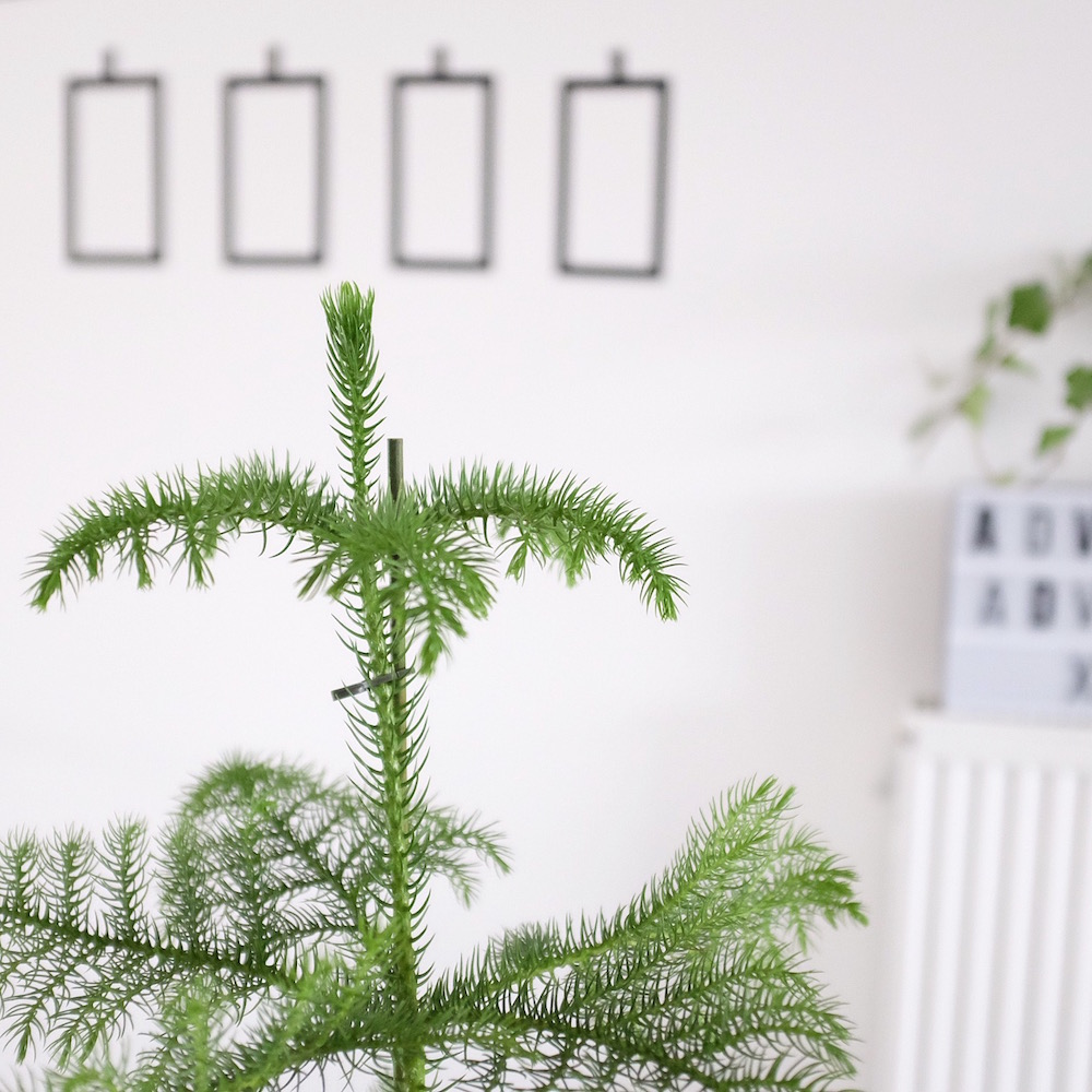 diy-masking-tape-adventskranz-sophiagaleria