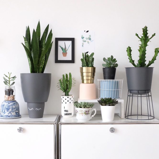 https://www.urbanjunglebloggers.com/november-2016-creative-plant-pots/