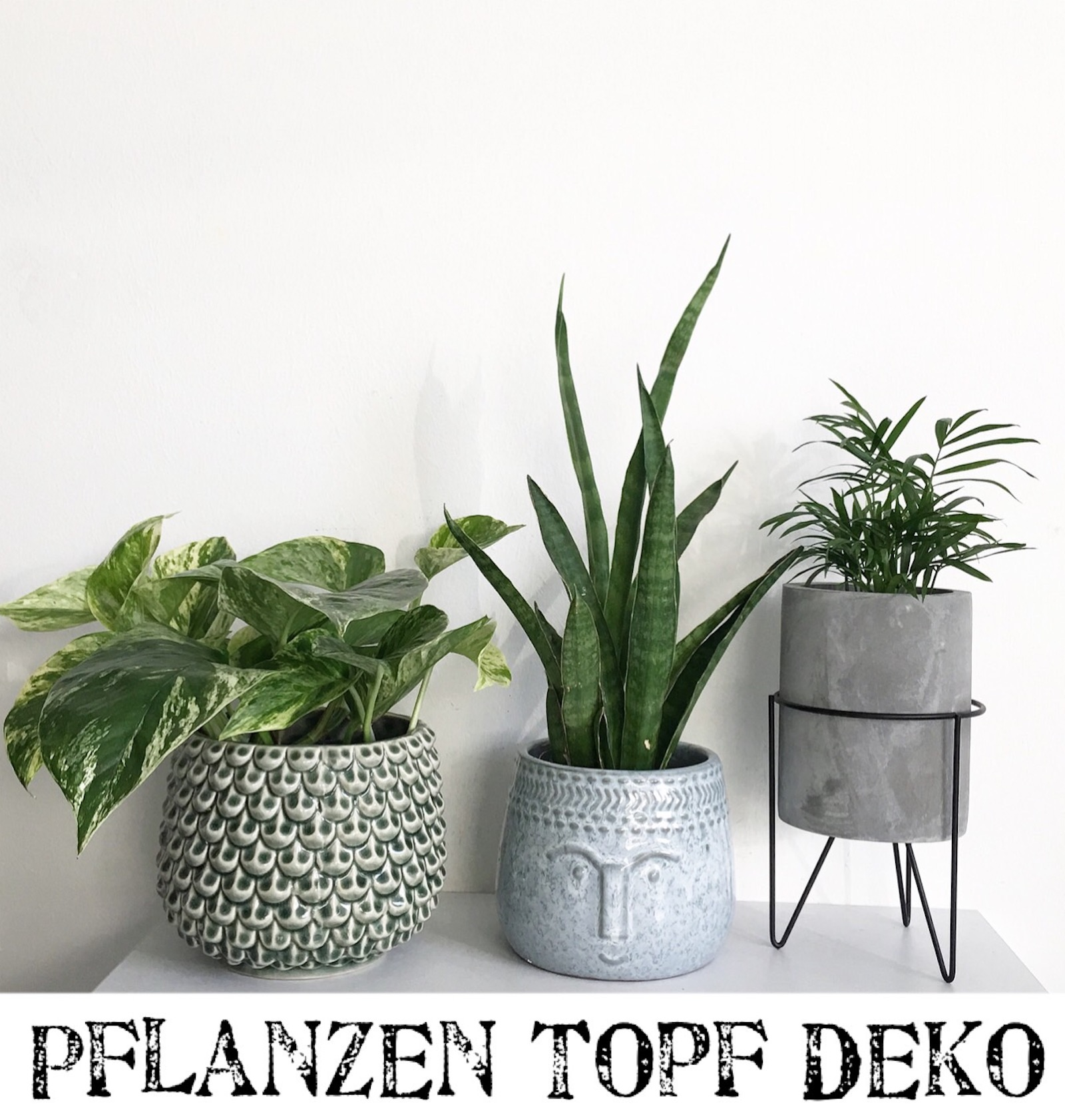 top 5 pflanzentopf inspiration sophiagaleria