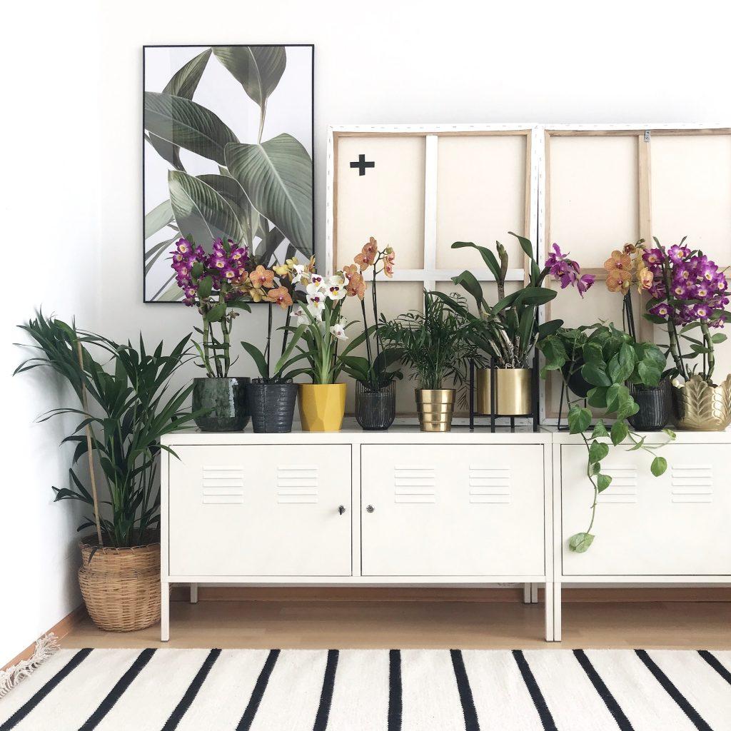 Orchideen deko tipps f r jeden wohnstil sophiagaleria - Orchideen deko ...