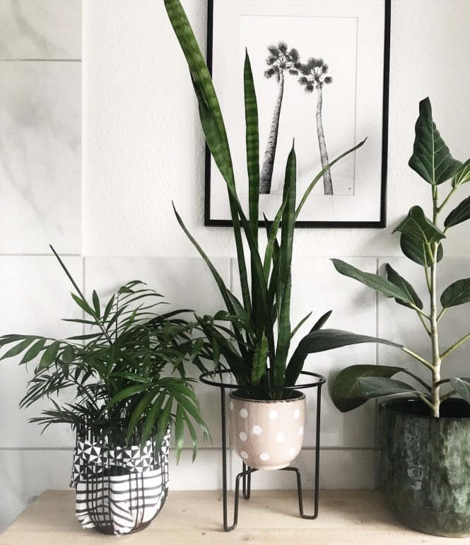 DIY Blumentopf Pflanzentopf mti Punkten sopohiagaleria