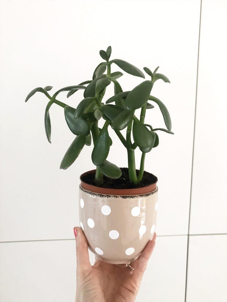 Punkte DIY Blumentopf sophiagaleria