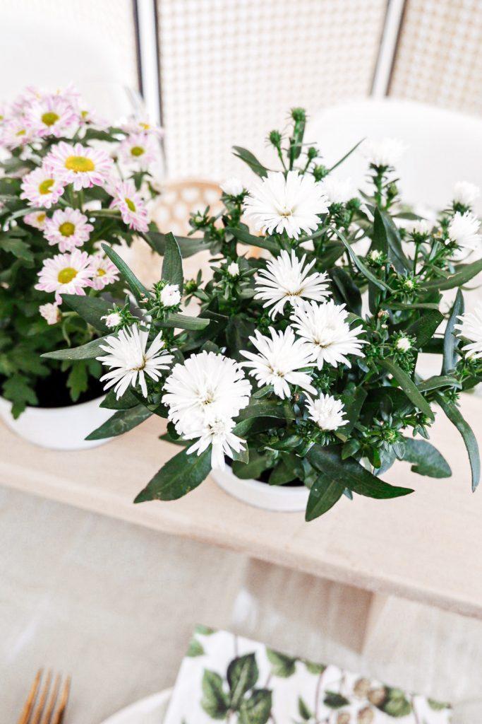 Astern Blumendeko
