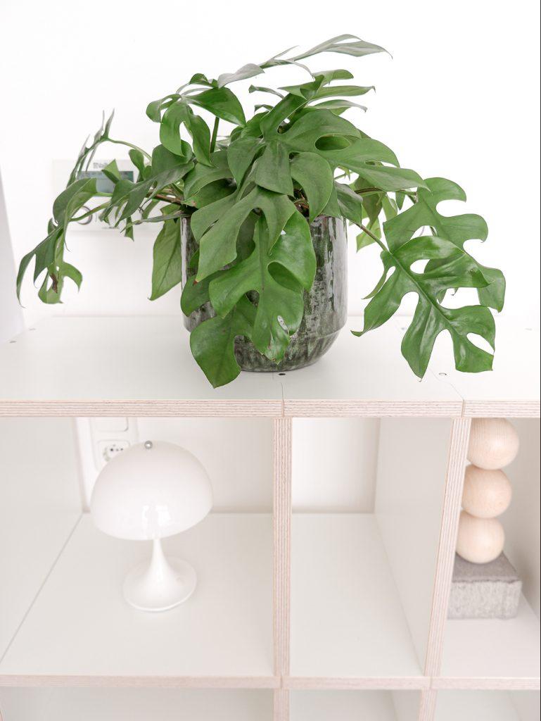 Mocoba Regalsystem mit Monstera Pflanze